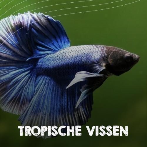 Tropische vissen aquarium