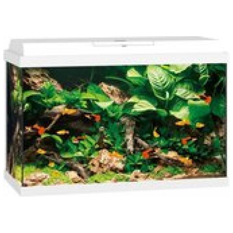 Juwel Primo 70 Aquarium - Wit - 70L - 61 x 31 x 44 cm