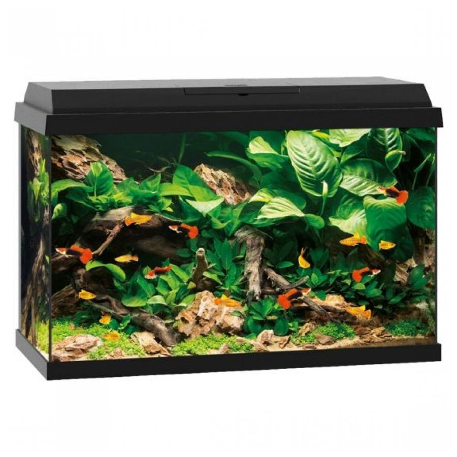 Juwel Primo 70 Aquarium - 61 x 31 x 44 cm - 70 L - Zwart
