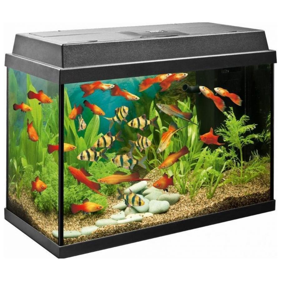 Juwel Rekord - Aquarium - 63 liter - Zwart